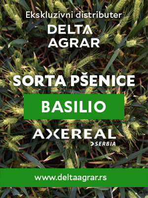 Baner_sorta_AXEREAL_BASILIO_300x400px.jpg