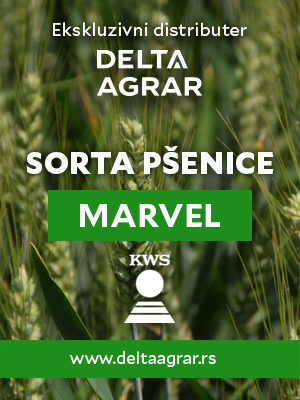 Baner_sorta_KWS_MARVEL_300x400px.jpg