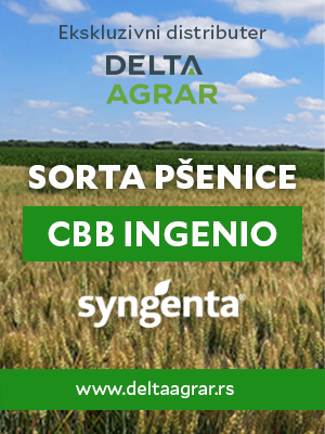 Baner_sorta_SYNGENTA_CBB_INGENIO_300x400px.jpg