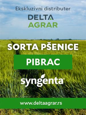 Baner_sorta_SYNGENTA_PIBRAC_300x400px.jpg